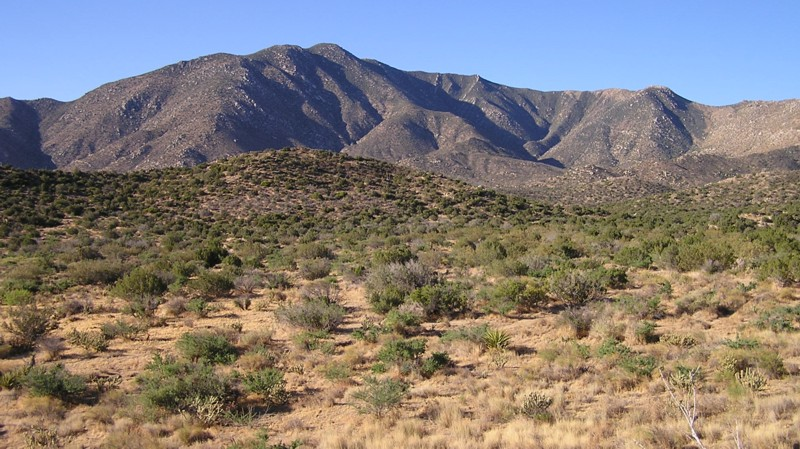 an overview of the desert biome and the species in it There are eight major terrestrial biomes: tropical wet forests, savannas, subtropical deserts, chaparral, temperate grasslands, temperate forests, boreal forests, and arctic tundra the same biome can occur in different geographic locations with similar climates.